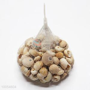 Unique Natural Shell For Promotion