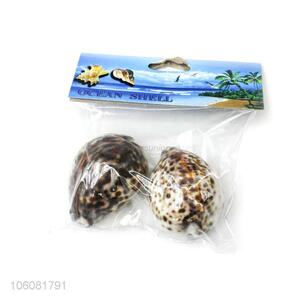 Good quality natural sea shell best conch crafts