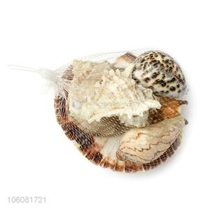 Factory sales natural sea shell natural craft shell in net bag