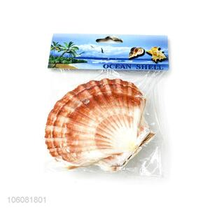 Wholesale sea shell best shell decorative shell craft