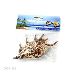 Newest natural sea shell fashion shell conch crafts set
