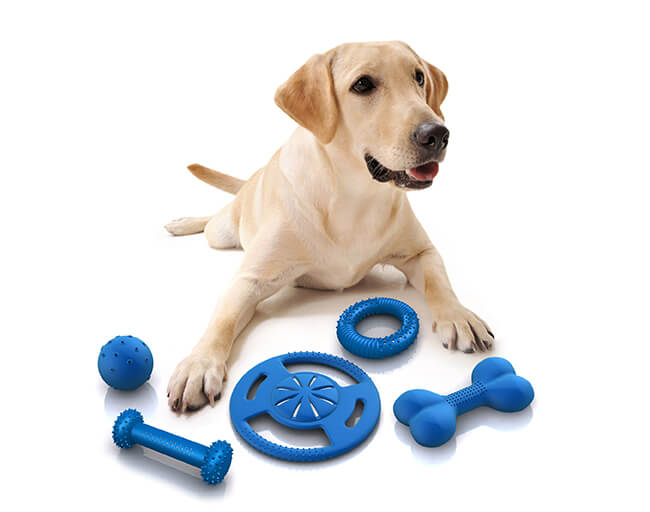 Choosing the Safe Toys for Your Dog